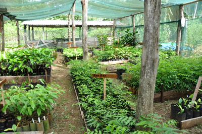 The Tree Nursery at Cerro Osa Reforestation Project