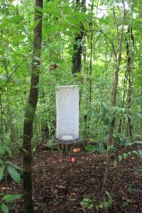 Frugivorous butterfly trap on the Osa Peninsula