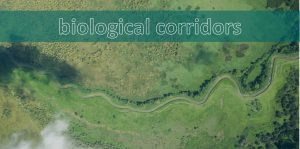 biological corridors