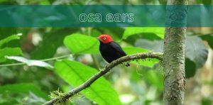 osa ears