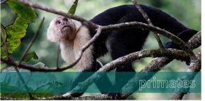 primates, wildlife