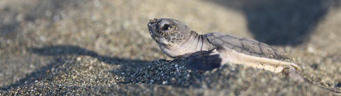 New Costa Rica Adventure: Sea Turtle Encounter Cruise Tour