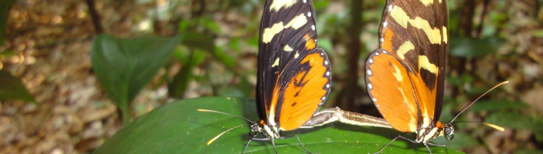 butterflies Manuel Sanchez
