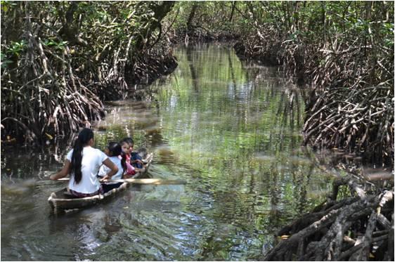 Mangrove Swamp Definition