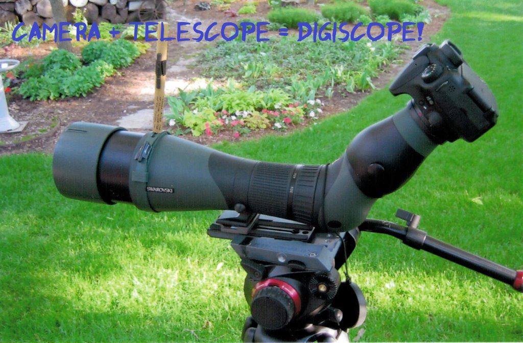 digiscope words (3)