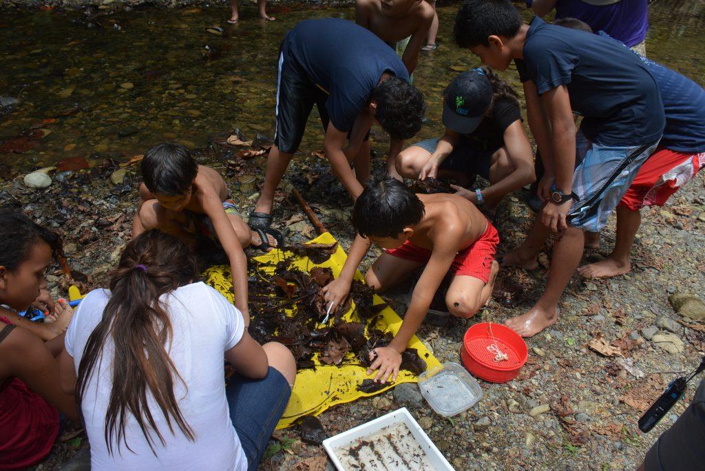 Los estudiantes recogen macroinvertebrados usando un red de patada.