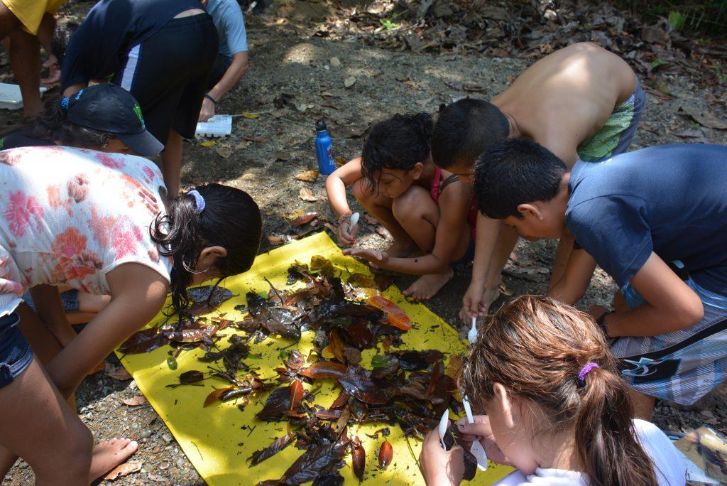 Los estudiantes clasifican macroinvertebrados traídos de Río Piro.