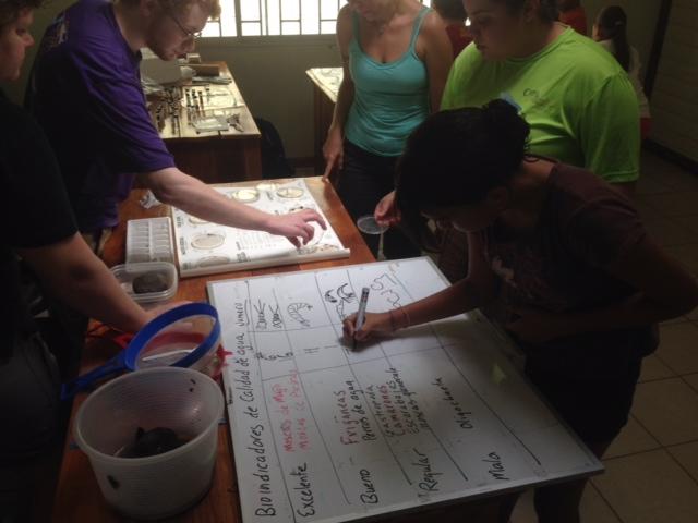Los estudiantes clasifican los invertebrados en categorías basadas en los indicadores de salud de la corriente.