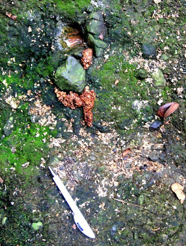 Localización de excretas sobre roca en río Coyunda