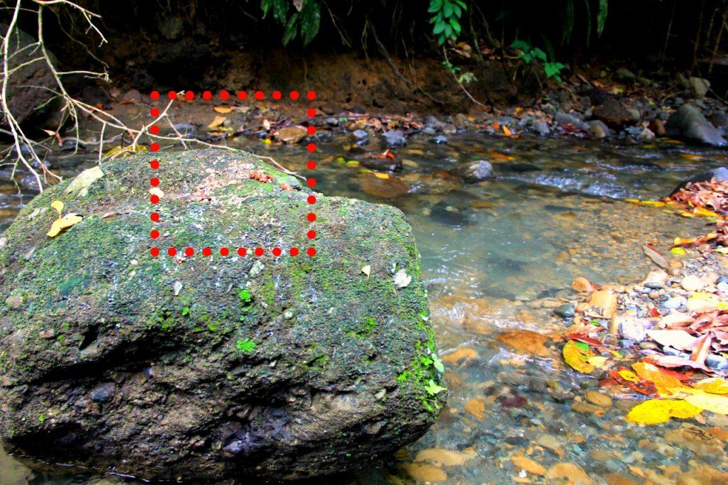 Excreta de nutria en río Coyunda.