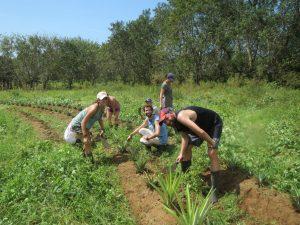 osa-verde-wildlife-farm