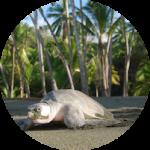 Sea Turtle Thumbnail