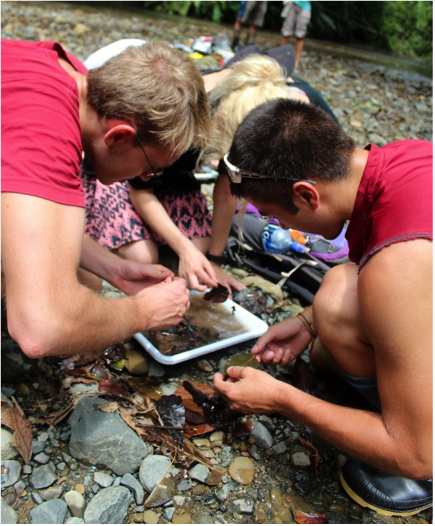 Volunteers intently looking for aquatic macro invertebrates.  Photo by, Erin Engbeck