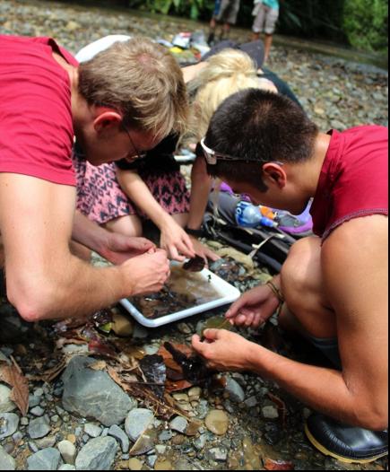 Voluntarios atentamente en busca de macroinvertebrados acuáticos. Foto por, Erin Engbeck