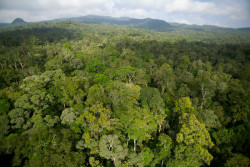 Arial view of rainforest. Juan Carlos Cruz, corcovado
