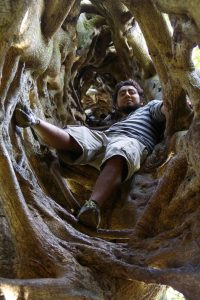 Hollow fig tree after the host died in Monteverde, Costa Rica.