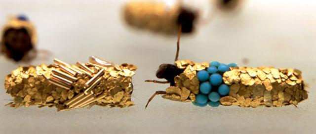 Caddisfly Gold