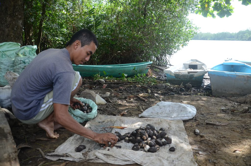 sustainable harvesting of mollusk