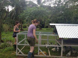 sustainable animal husbandry