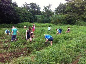 Students learning about sustainable agriculture