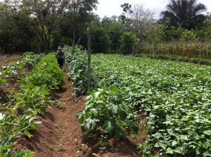 sustainable agriculture at finca osa verde