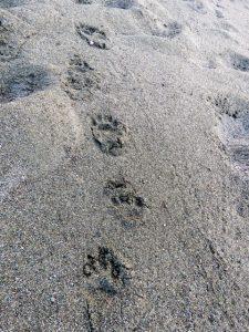 camoudi tracks