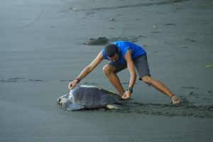 measuring-seaturtle-lora