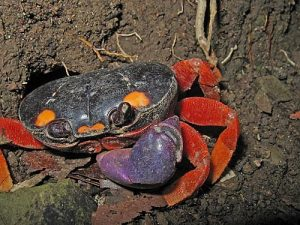 halloween-crab-forblog2