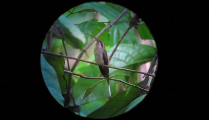 Exploring Costa Rica's Osa Peninsula