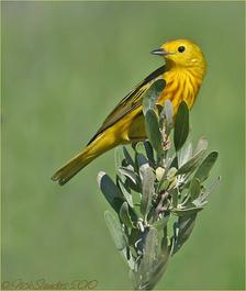 Reviving a rainforest helps keep migratory birds' winter home wild