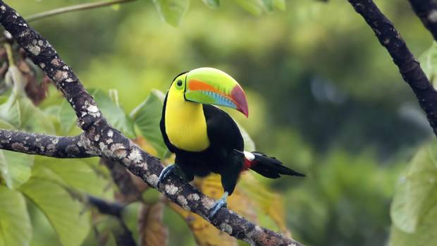 Rare and beautiful: See Costa Rica's wildlife while you can