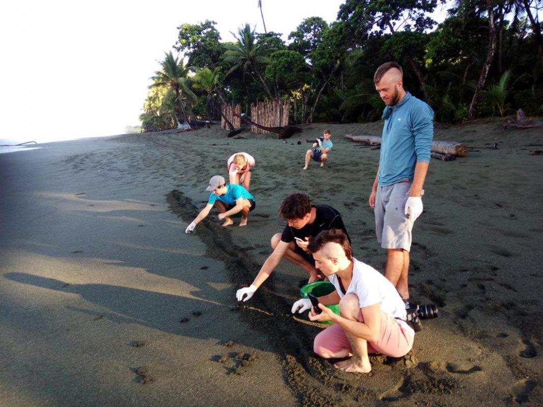 Photo by Marina Garrido, Sea turtle volunteers release hatchlings back to the ocean