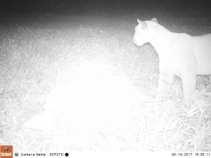 Photo taken from our camera trap