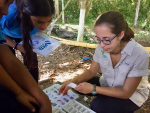 Students identifying macroinvertebrates