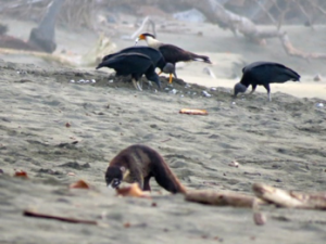 Photo by Janell Canon on predation by coati and birds