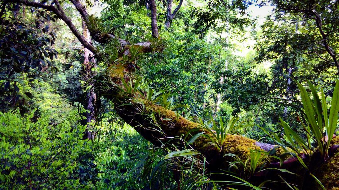 The tropical wet forest of the Osa Peninsula is incredibly rich in vegetation. Here is just one angle covered by a camera trap.