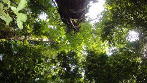 Underneath Osa's Canopy; photo by Manuel Sánchez