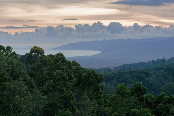Massive, rain-carrying clouds form and unleash torrents of water daily in this topical environment. The intensive growth of the rainforest would be impossible without the sustenance provided by the beautiful thunderheads in the distance.