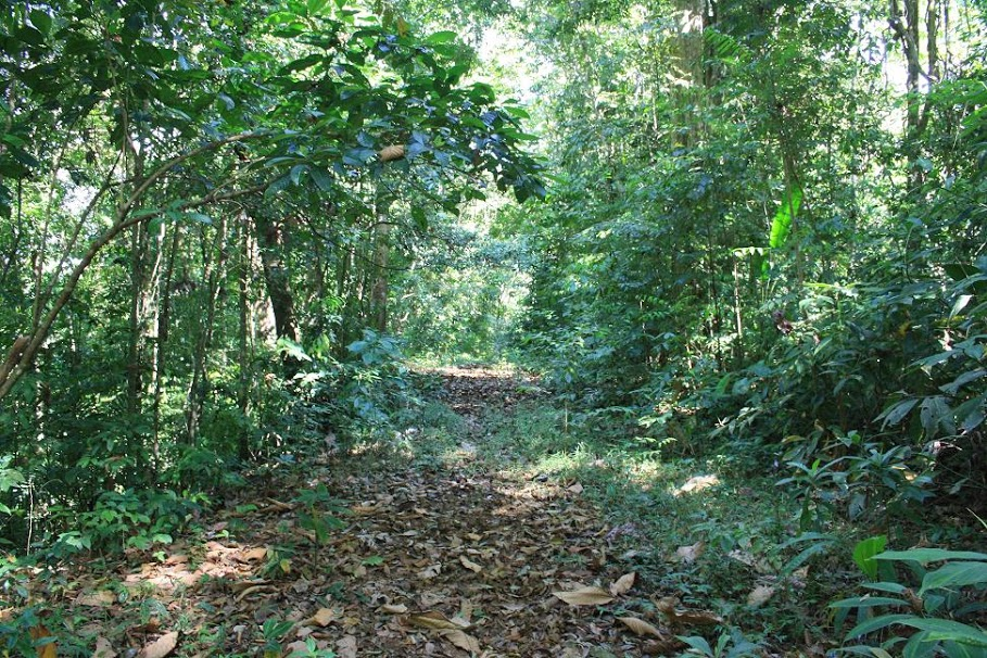 One of Osa's nature trails through the forest; Photo by Manuel Sanchez