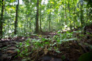 Flourishing Tree Growth on Osa's Forest Floor