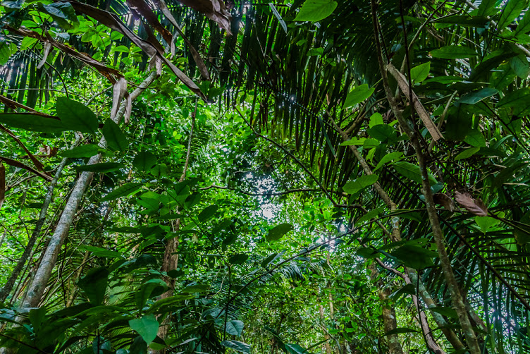 Diverse Species of Trees in the Osa. Photo by Frank Uhlig