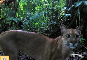 The Osa Camera Trap Network: Uniting people to monitor biodiversity